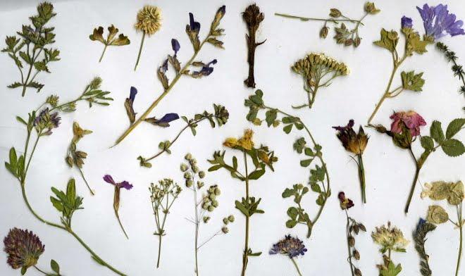 Crear-un-herbario-o-la-historia-de-la-biodiversidad-vegetal